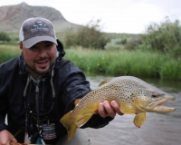 Headwaters Ranch Brown Trout