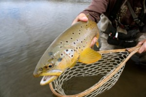 Fly_Fishing _Trips